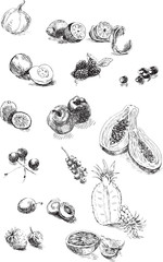 fruits and vegetables, hand drawing