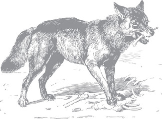 Wolf with bone in mouth