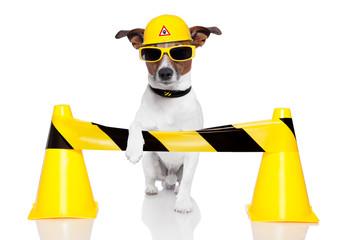 under construction dog