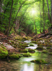 Wall Murals Forest river River deep in mountain forest