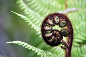 Fotorolgordijn Nieuw Zeeland Fern Frond, New Zealand
