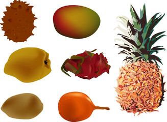 set of exotic fruits collection illustration