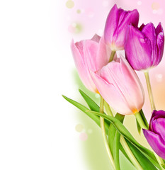Five colorful tulips
