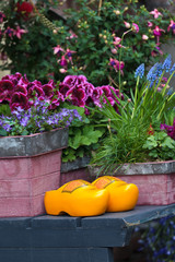 Pair of Dutch yellow clogs surrounded by garden plants