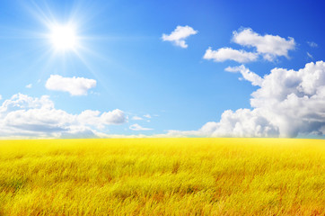 Autumn landscape. Yellow field and blue sky