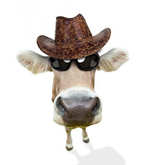 Funny cow portrait, isolated on white background