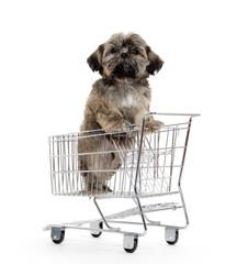 shih tzu puppy in shopping card