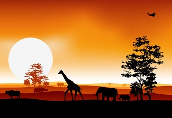 beauty silhouette of safari animal
