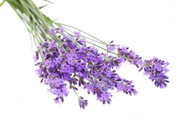 Tuinposter Lavendel Lavendel auf weißem Hintergrund
