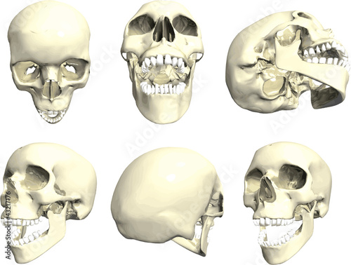 quotseries of human skull in many anglesquot stock image and