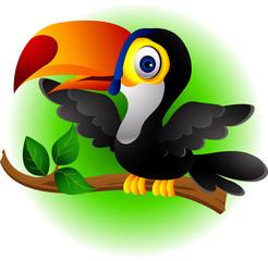 funny toucan bird cartoon