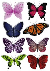 butterfly wings are pretty