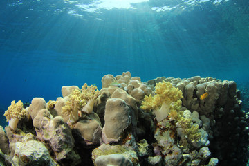 Coral Reef Scene in sunlight