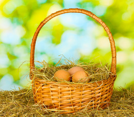 brown eggs in a wicker basket on hay on green background