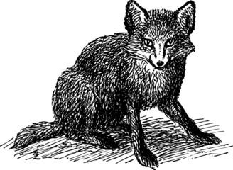 Little fox sitting on the ground
