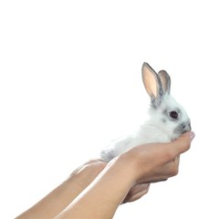 Adorable white rabbit in hand