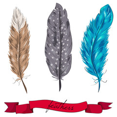Vector feather set with ribbon hand drawn