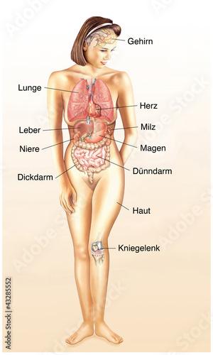 Menschliche Körper mit Organen\