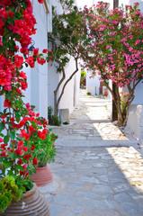Obraz Cicha ulica w małej tradycyjnej greckiej wiosce - fototapety do salonu