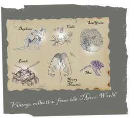 MICRO WORLD - hand-drawn image in vintage style.