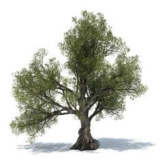 olive tree 3d illustration