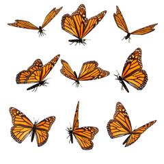 Beautiful 3D Butterflies