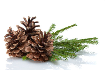 Pine Cones and Needles