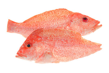 Sectional Cuts Of A Red Snapper Fish