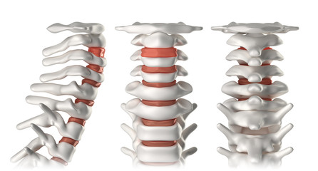 Spine anatomy cervical region - lateral, anterior, posterior