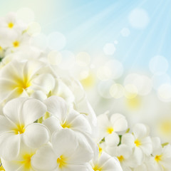 Tuinposter Frangipani Bouquet of plumeria flowers