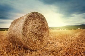 Fototapeta Round bales of straw obraz