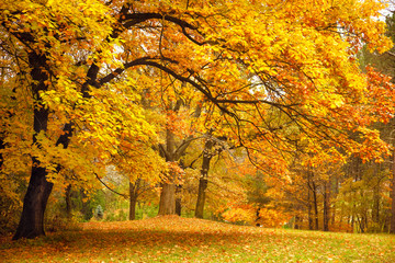 In de dag Honing Autumn / Gold Trees in a park