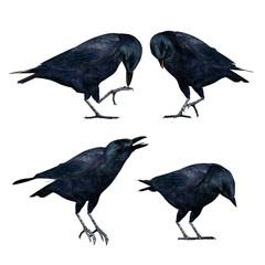 3D Crows