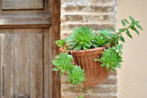 Vaso da parete con piante ornamentali immagini e - Piante da parete ...