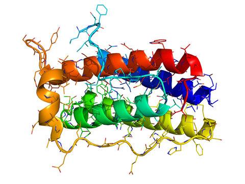 Leptin 3d molecule on white