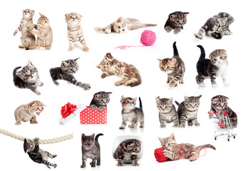 Papier Peint - Funny British kittens collection isolated on white