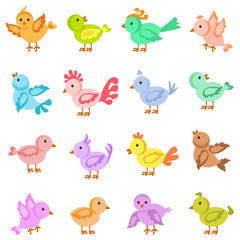vector illustration of collection of colorful bird