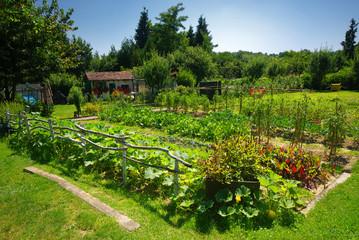 Fototapeta premium Organiczny ogród warzywny.