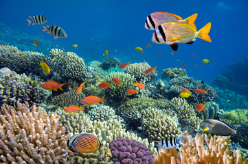 Aluminium Prints Under water Underwater shoot of vivid coral reef with a fishes