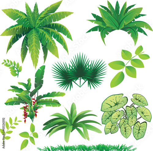 Plants stock image and royalty free vector files on - Plante jungle ...