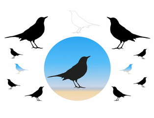 Birds Silhouette, blackbird, isolated on white background