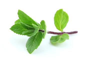 Wall Mural - Mint leaf