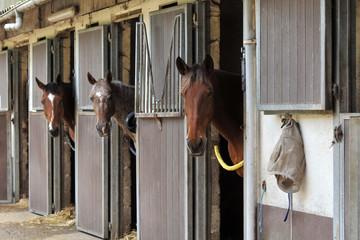 Foto op Aluminium Paardrijden chevaux