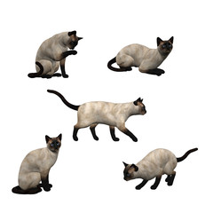 3D Siamese Cats