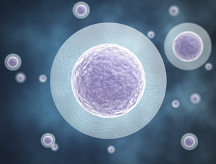 Egg cell background