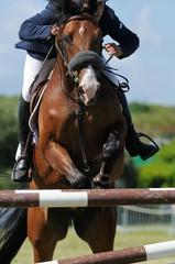 superbe saut d'un cheval de concours