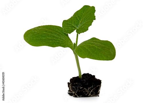 Kurbispflanze Stock Photo And Royalty Free Images On Fotolia Com