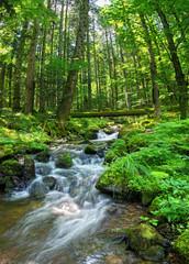 Fototapeta Ruisseau vosgien obraz