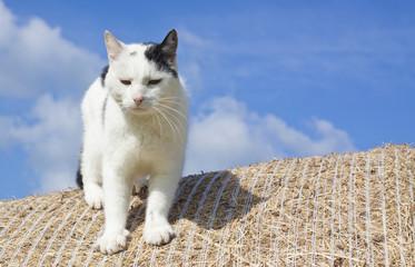 Katze klettert von einem Heuballen