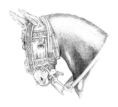 Drawing from L. Da Vinci : Horse head - 16th century